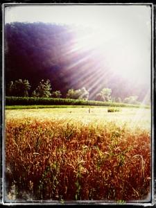 razglednica belinov stiblc radenci zlato polje